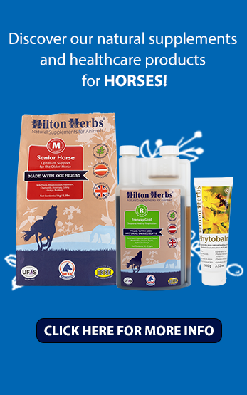 Homepage Right Horses image