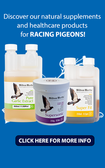 Homepage Right Pigeons image