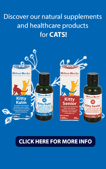 Homepage Right Cats image