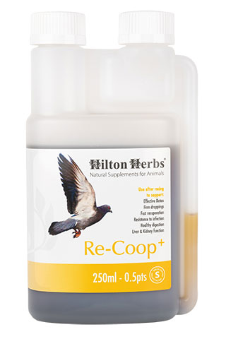 Re-Coop+ - Energy Booster for Pigeons - 250ml bottle