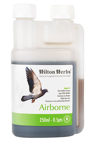 Airbone - Supports Respiratory Health in Pigeons - 250ml bottle